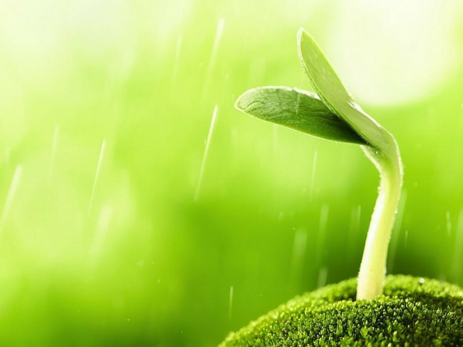 Germogli Bamb Prezzo.Usi E Benefici Dei Germogli E Del Germogliatore