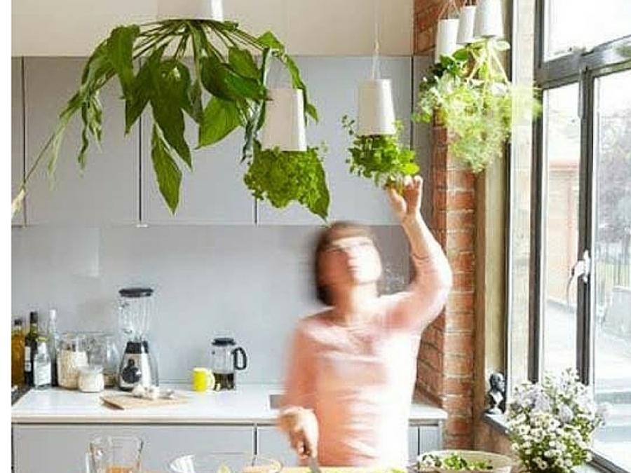 10 idee per arredare con le piante aromatiche for Arredare casa con le piante