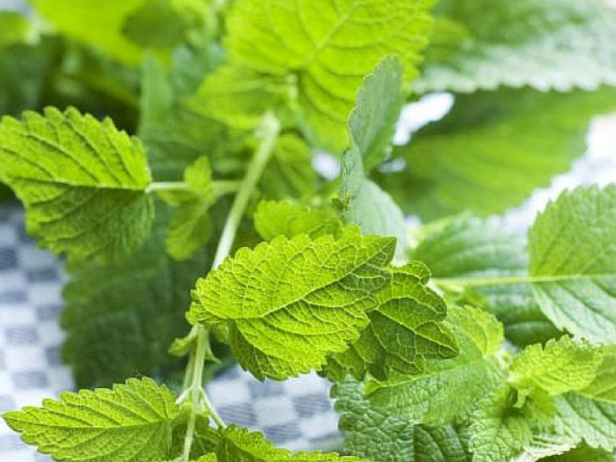 Le piante antizanzare da avere in casa - Antizanzare casa ...